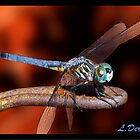 Dragonfly in Red by ldermid75
