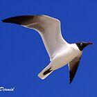 Soaring Seagull by ldermid75