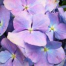 Pretty in Purple by elsha
