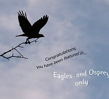 Eagles & Osprey Challenge by Geno Rugh
