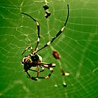 In the Spiders Web. by Katherine Johns