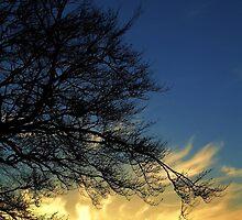 Flaming Sun by tartanink