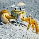 Crab at palm island by jozi1