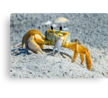 Crab at palm island Canvas Print