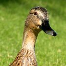 Duck checking me out by Bonnie Pelton