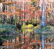 Colorful Swamp by Rosalie Scanlon
