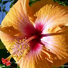 Golden Yellow Hibiscus by Angela Gannicott
