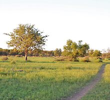 into the bush, madiwke, south africa by mellychan