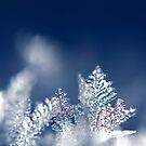 Frost Brrrrrrr by BobbiFox