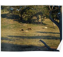 Late Afternoon On The Farm. Poster