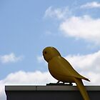 A Big Tweety Bird by Alison Netsel