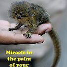 Pygmy marmoset -- Amazon by Cathleen Burnham