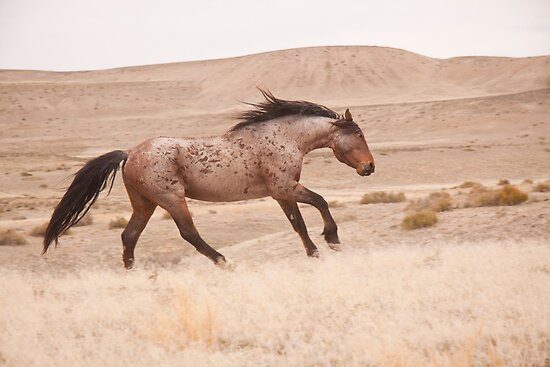 Wild Stallion Dance by Kent Keller