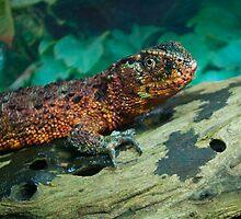 Chinese Crocodile Lizard by Diego  Re