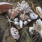 Beach Combing Delights - Maggies Beach, Warroora Station WA Australia by cookieshotz