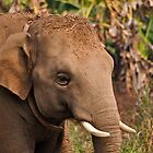 Asian Elephant by GarethWilton