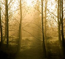 First cold mornings of Autumn by Toni Holopainen