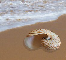 Nautilus Shell by the Shore by ShellsbyShore