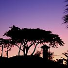 Silhouette by Timothy Adams