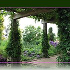 The Oak Pergola at Hyde Hall by BlueMoonRose