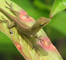 What Attracts Flies for Anole Hatchling by JeffeeArt4u