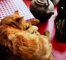 Old Lazy Cat by SuddenJim