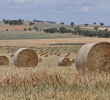 2000 hay bales by julie anne  grattan