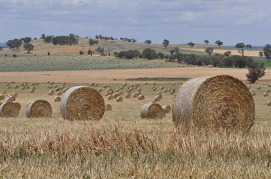 2000 hay bales by julie anne  grattan