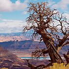 Twisted Juniper at Dead Horse Point, Utah by Alex Cassels