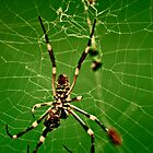 In the Spiders Web III. by Katherine Johns