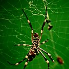 In the Spiders Web IV. by Katt25