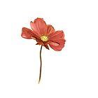 Flower-001 by DigitalTulip