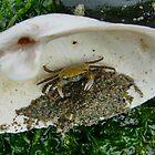 Crab in Hiding by AnnDixon