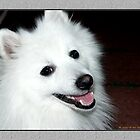 My Japanese Spitz  :-) by Maj-Britt Simble