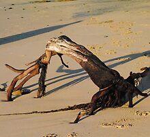 Natures Artwork on the Beach - Apollo Bay, Victoria by Heather Samsa