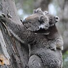 Koala and Baby - Cape Otway, Victoria by Heather Samsa