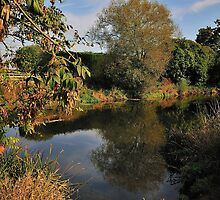 Still - River Stour by delros