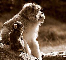 Monkey say, Monkey do by JaymeeLS