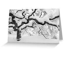 Japanese Maple Tree Greeting Card
