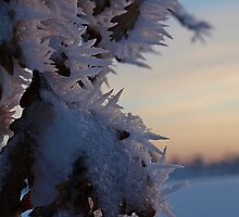 Ice flowers by heinrich