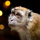 Temple Monkey of Batu Caves by Gavin Poh