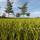 Green Field on the Kaoh Pan Island by thesiracusas