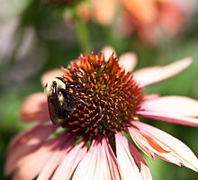 Worker Bee by Sharlene Rens