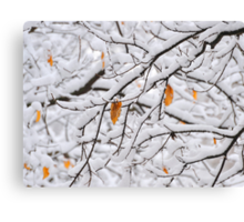 The Last Leaves Canvas Print