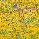 Deer in a Field of Wildflowers by Oscar Gutierrez