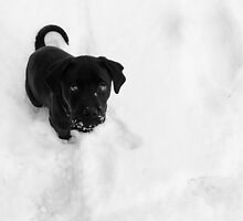 Cinder in the Snow by Lori Deiter