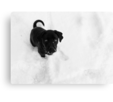 Cinder in the Snow Canvas Print