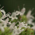 Flower/Dragon Jaws by Yauya
