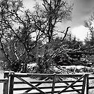 Wee Gate BW by Greig Nicholson