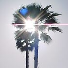 Palm 1 by Photos55